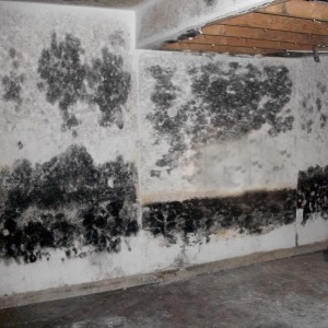mold_remediation_contractor_pcs